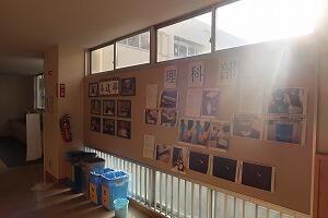茶道部・理科部の活動写真